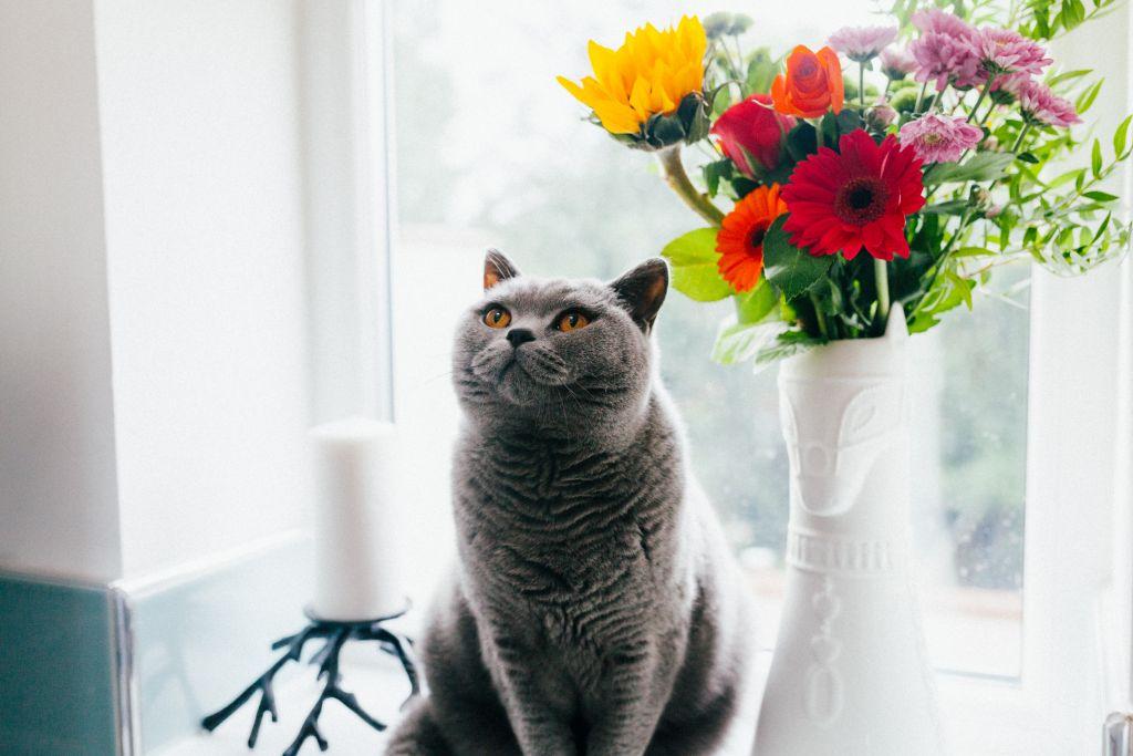 best odour control eliminating cat & kitty litter