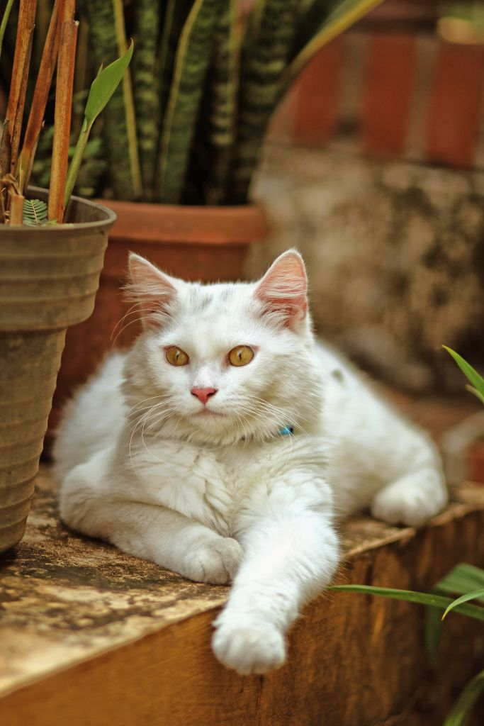 Odour Free Cat Litter Tray