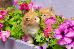 two kittens playing in the garden