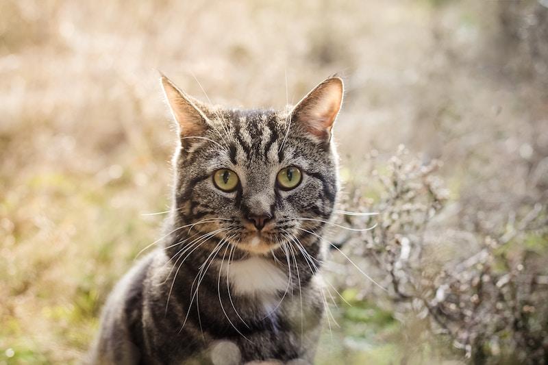 natural cat & kitty litter