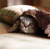 The Benefits of Natural, Eco Friendly Cat Litter