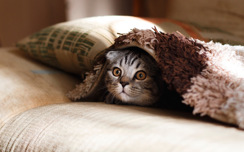 Benefits of Natural, Eco Friendly Cat Litter