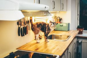 The Advantages of Cat Litter Home Delivery