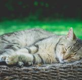 Cat Litter Types & Options: The Ultimate Guide