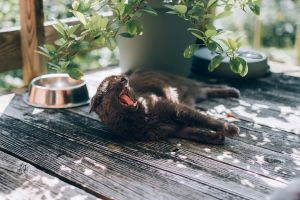 cat lying on a deck